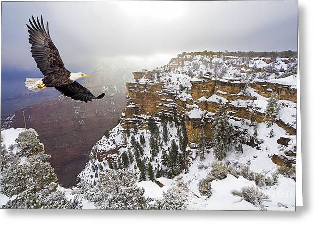 Bald Eagle Flying Above Grand Canyon Greeting Card