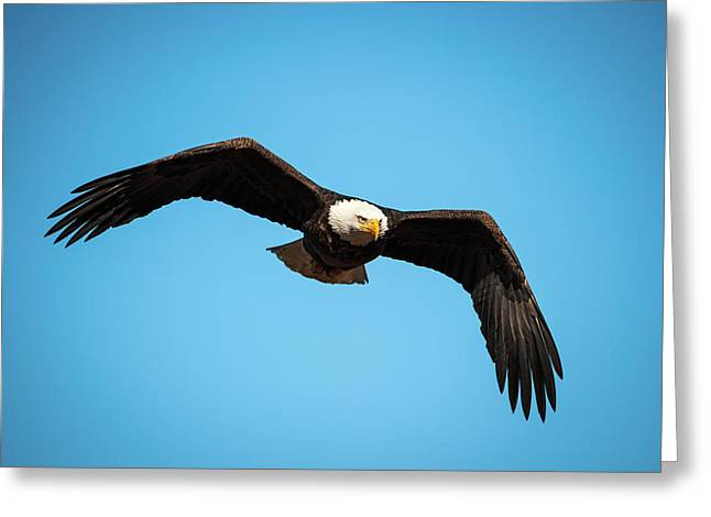 Greeting Card featuring the photograph Bald Eagle In Flight  by Jeff Phillippi