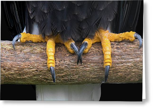 Bald Eagle Talons Greeting Card