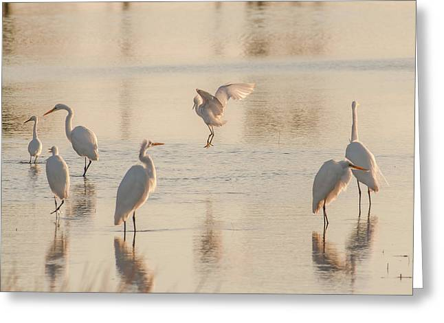 Ballet Of The Egrets Greeting Card