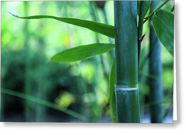 Bamboo 0321 Greeting Card