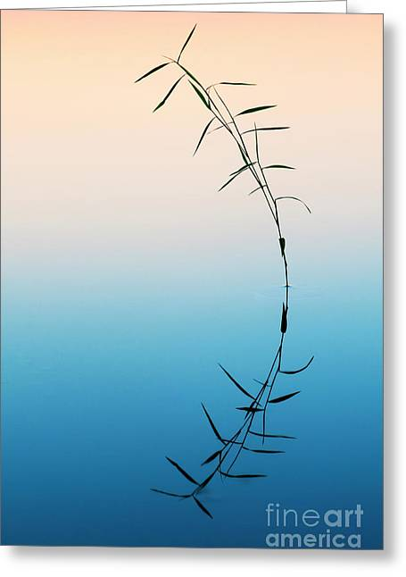 Bamboo Grass Reflection Greeting Card by Tim Gainey