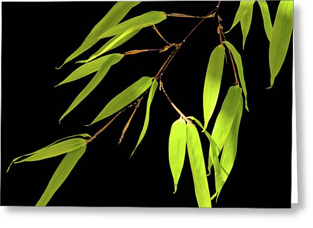 Bamboo Leaves 0580a Greeting Card