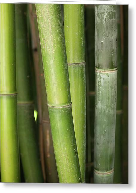 Bamboo Stalk 4057 Greeting Card