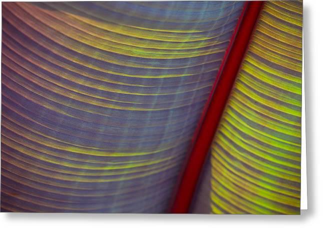 Banana Leaf 8597 Greeting Card