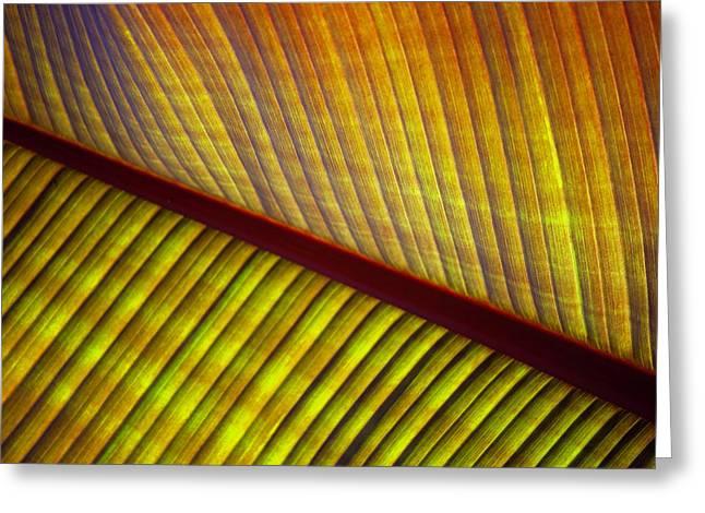 Banana Leaf 8602 Greeting Card