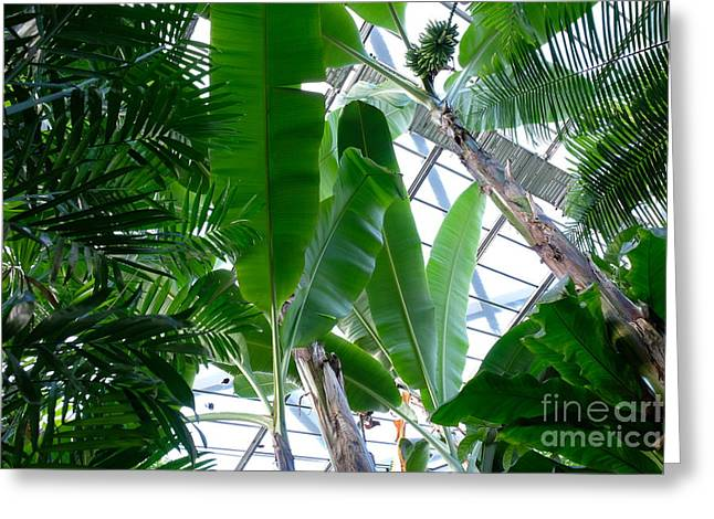 Banana Leaves In The Greenhouse Greeting Card