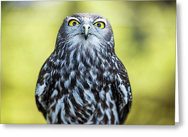 Greeting Card featuring the photograph Barking Owl by Rob D Imagery