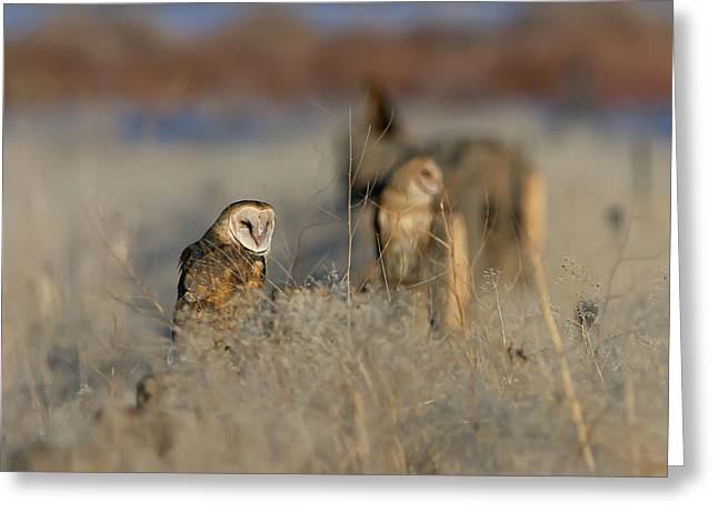 Barn Owls 9 Greeting Card