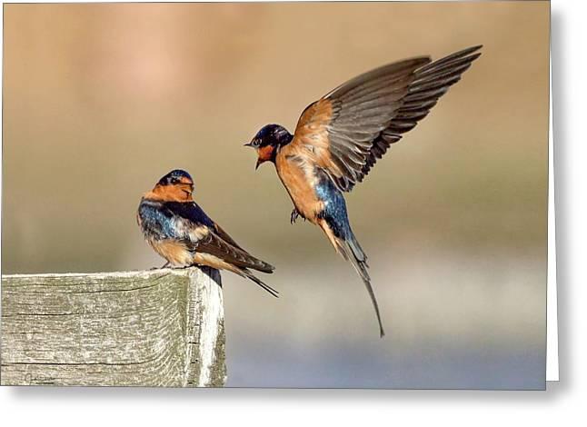 Barn Swallow Conversation Greeting Card
