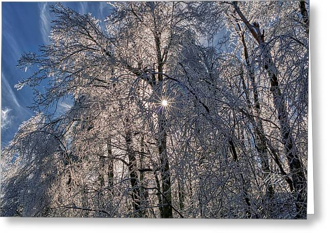 Greeting Card featuring the photograph Bass Lake Trees Frozen by Meta Gatschenberger