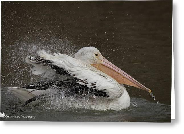 Bathing Pelican Greeting Card