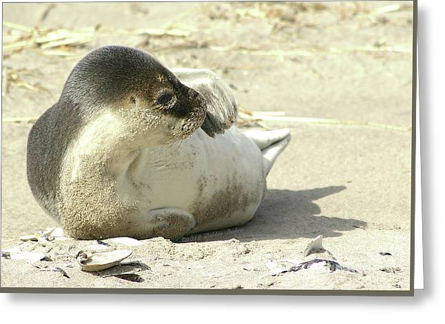 Beach Seal Greeting Card