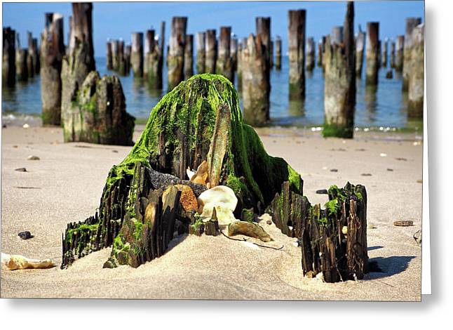 Greeting Card featuring the photograph Beached Walrus At Cape Charles Virginia by Bill Swartwout Fine Art Photography