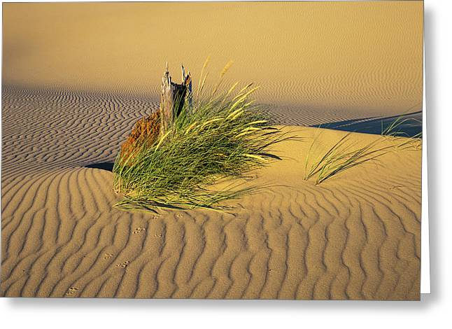 Beachgrass And Ripples Greeting Card