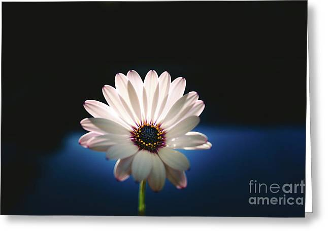 Beautiful And Delicate White Female Flower Dark Background Illum Greeting Card