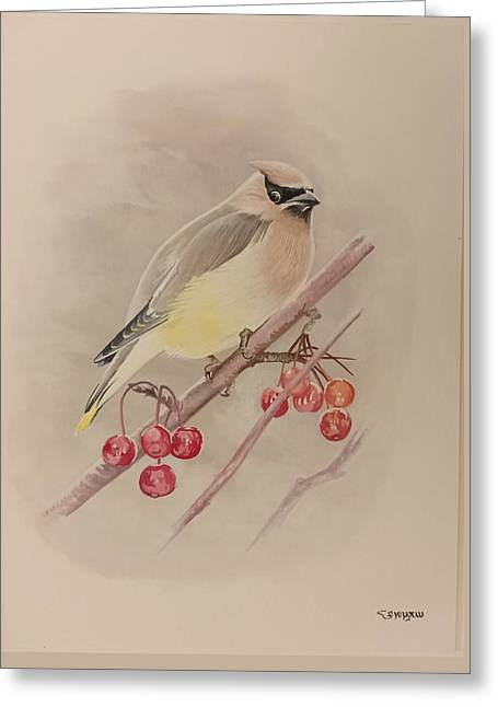 Beautiful Bird Greeting Card