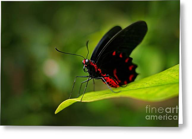 Beautiful Black And Red Poison Greeting Card