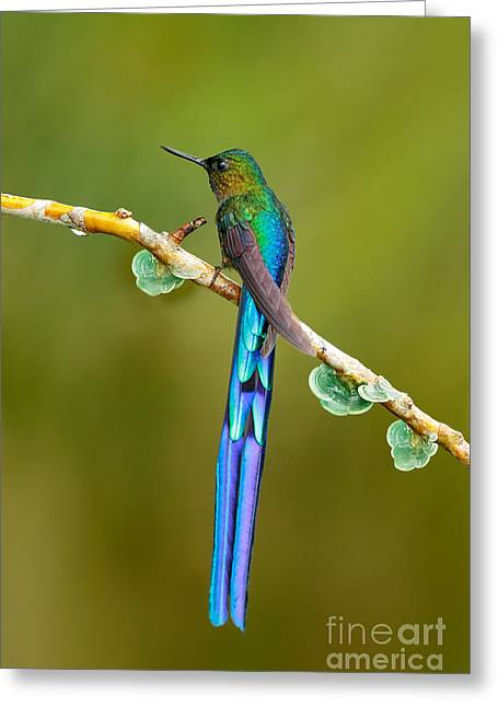 Cute Hummingbirds And Flowers Women/'s Tee Image by Shutterstock