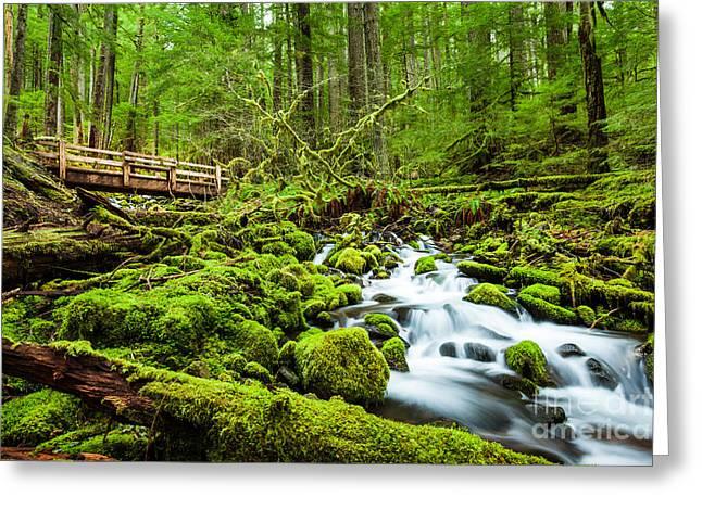 Beautiful Cascade Waterfall In Sol Duc Greeting Card