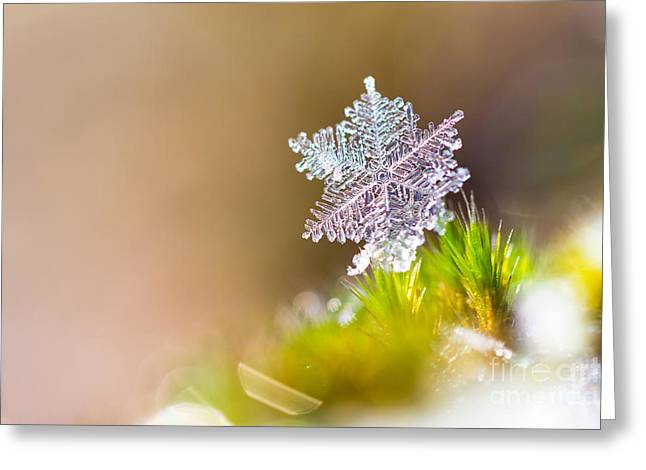 Beautiful Close Up Image Of A Snowflake Greeting Card