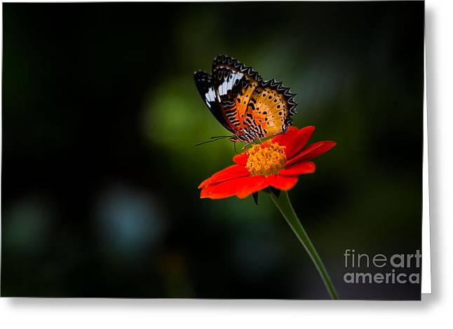 Beautiful Flower And Butterfly Greeting Card