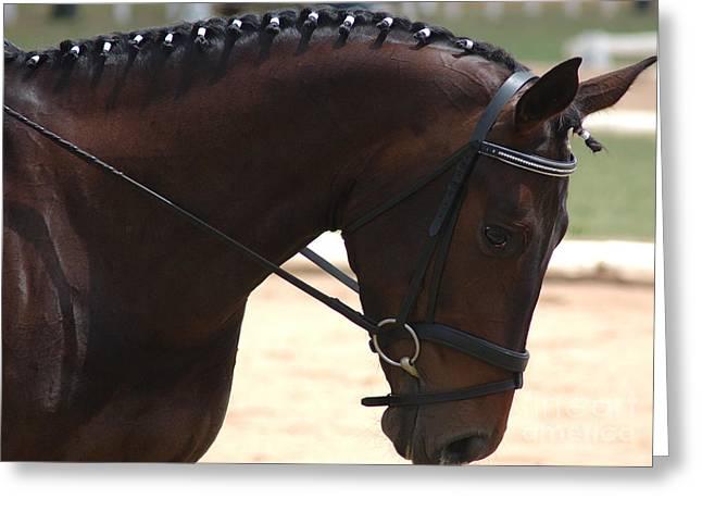 Beautiful Horse Greeting Card