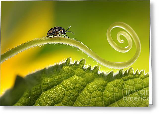 Beautiful Insects On A Leaf Close-up Greeting Card