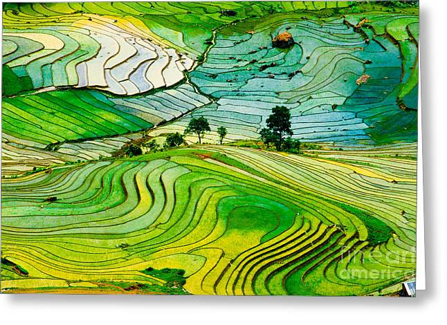Beautiful Landscape About Terraced Rice Greeting Card