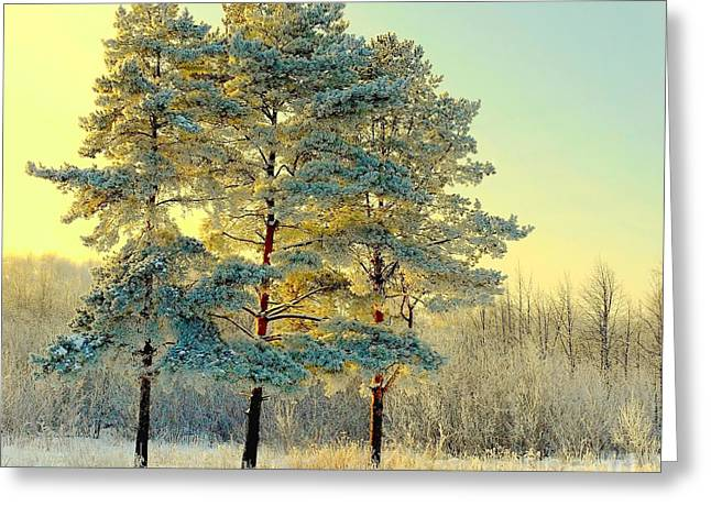 Beautiful Landscape With Winter Forest Greeting Card by Deserg