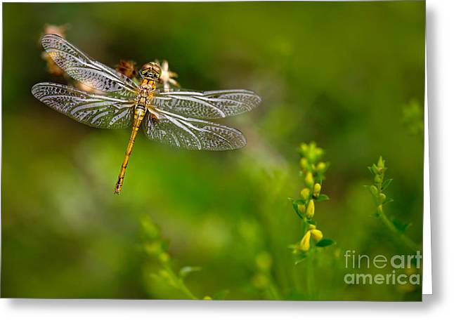 Beautiful Nature Scene With Common Greeting Card
