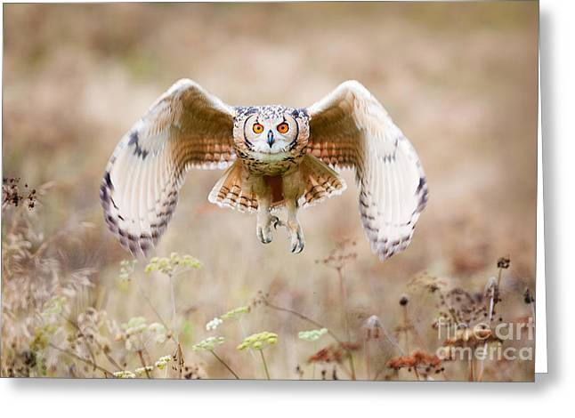 Beautiful Owl Photographed While Greeting Card