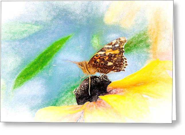 Beautiful Painted Lady Butterfly Greeting Card