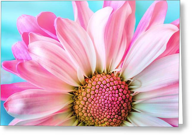 Beautiful Pink Flower Greeting Card