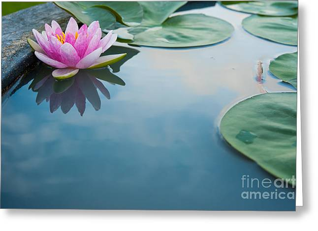 Beautiful Pink Lotus, Water Plant With Greeting Card
