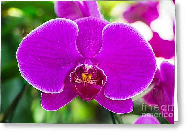 Beautiful Purple Orchid Flowers Greeting Card