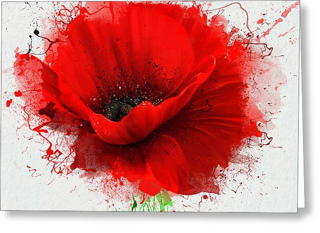 Beautiful Red Poppy, Closeup On A White Greeting Card