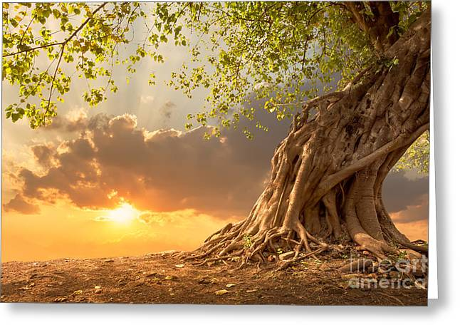 Beautiful Scence Of Big Tree With Greeting Card