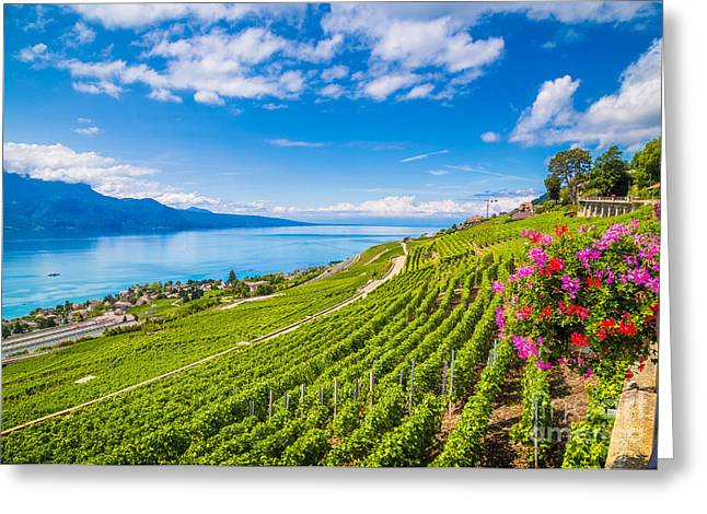 Beautiful Scenery With Rows Of Vineyard Greeting Card