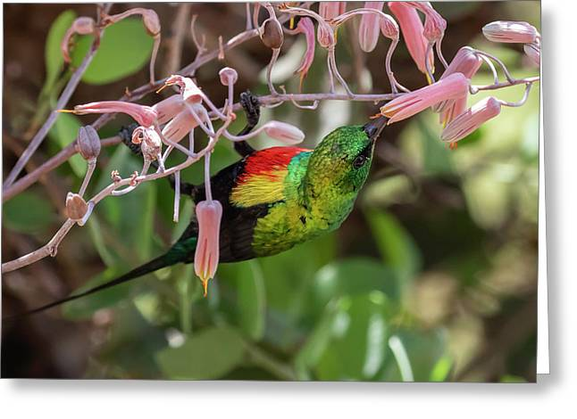 Beautiful Sunbird Greeting Card
