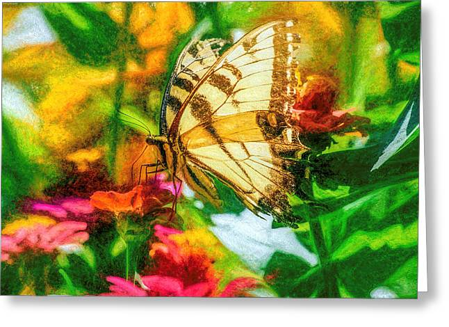 Beautiful Swallow Tail Butterfly Greeting Card