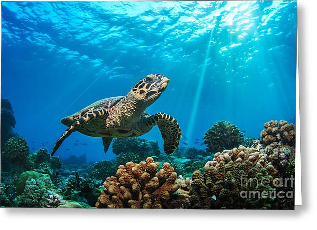 Beautiful Underwater Postcard Greeting Card