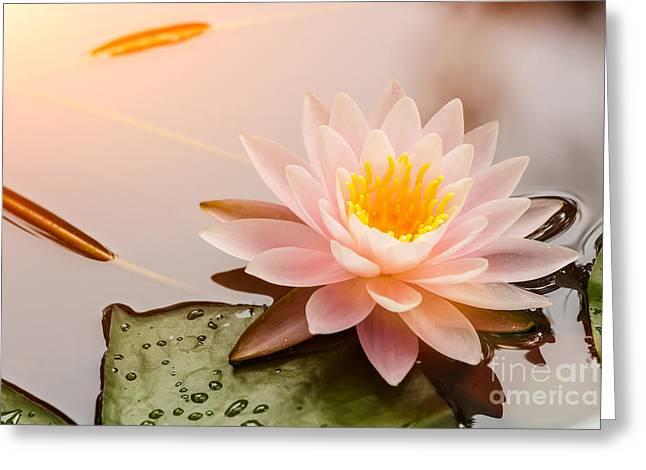 Beautiful  Waterlily Or Lotus Flower Greeting Card