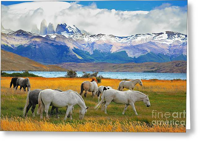 Beautiful White And Gray Horses Grazing Greeting Card