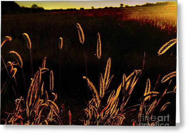 Beauty In Weeds Greeting Card