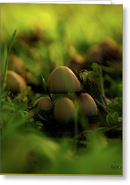 Beauty Of Fungus Greeting Card