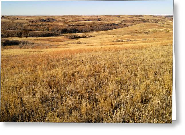 Beauty On The High Plains Greeting Card
