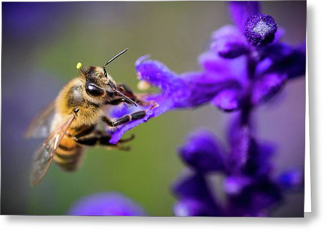 Greeting Card featuring the photograph Bee On A Purple Flower by Nicole Young