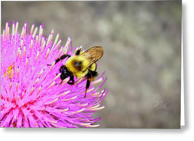 Bee On Pink Bull Thistle Greeting Card