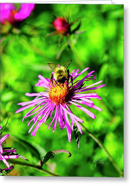 Greeting Card featuring the photograph Bee On Pink Flower by Meta Gatschenberger